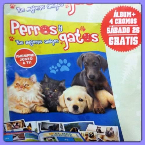 album mascotas